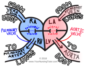 Easy to understand image of cardiac blood flow